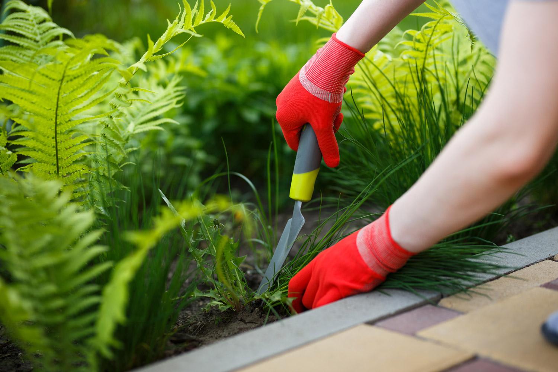 Service de jardinage et bricolage à cagnes-sur-mer