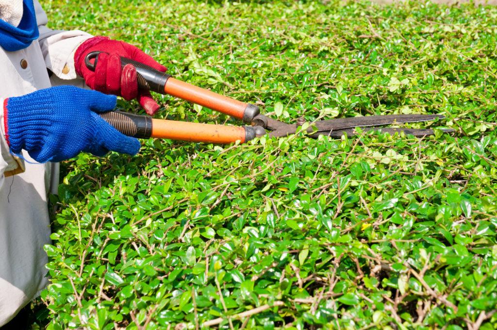 Service de jardinage